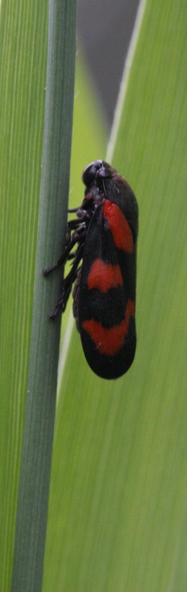 Veldcursus Drentse insecten